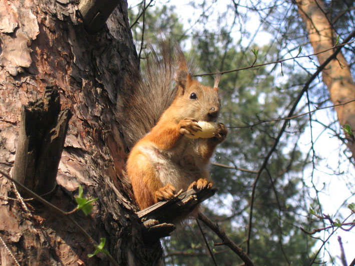 "photo ""Squirrel eating"" tags: nature, wild animals"