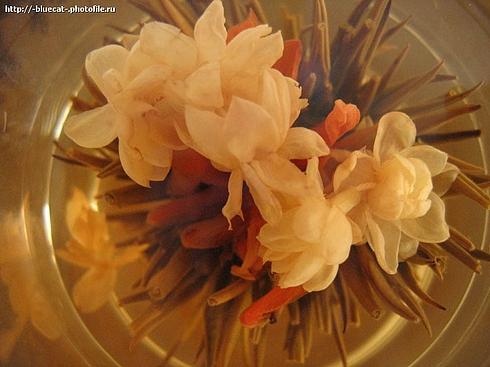 """photo """"Green tea"""" tags: macro and close-up,"""