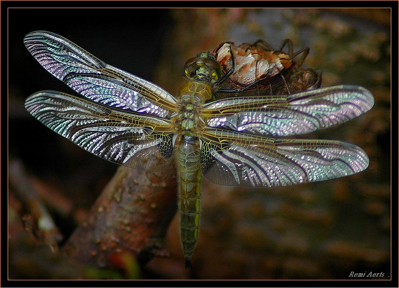 "photo ""silver wings"" tags: nature, macro and close-up, insect"