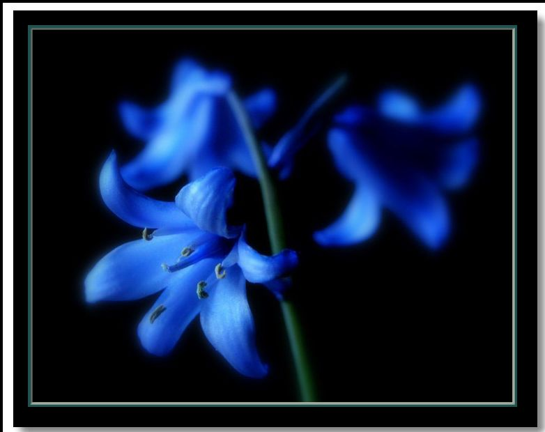 "photo ""bluebells"" tags: nature, flowers"