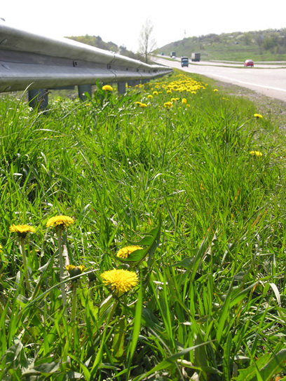 "photo ""Dandelions"" tags: landscape, spring"