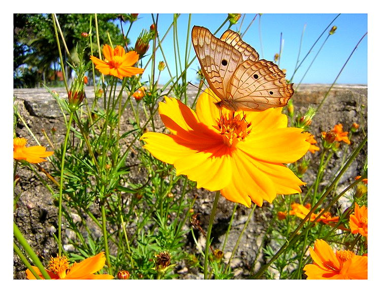 """photo """"Butterfly 2"""" tags: nature, flowers, insect"""