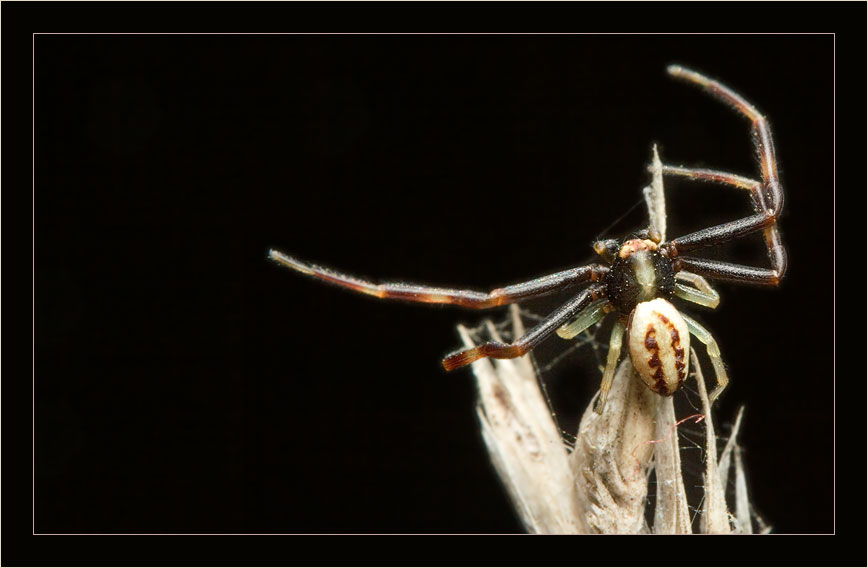 "photo ""hunter"" tags: macro and close-up, nature, insect"