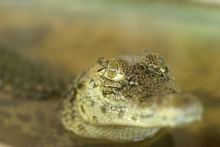 """photo """"Eyes Wide Shut"""" tags: nature, portrait, wild animals"""