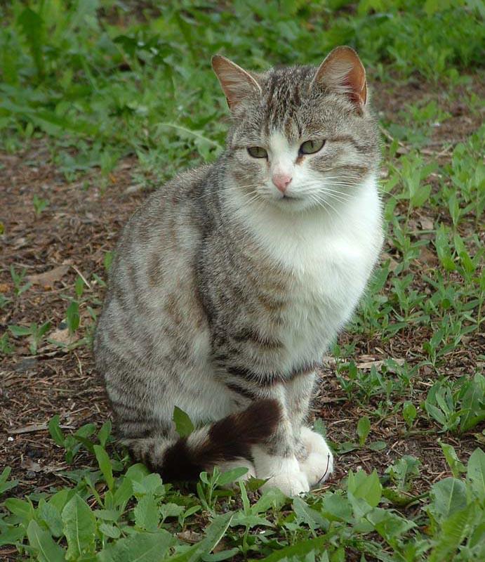 "photo ""Mood"" tags: nature, pets/farm animals"