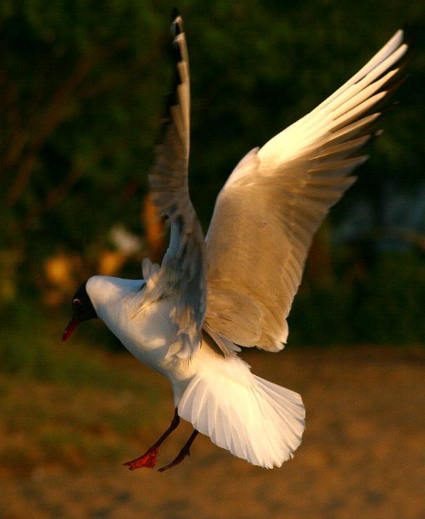 "фото ""Wings"" метки: природа, дикие животные"