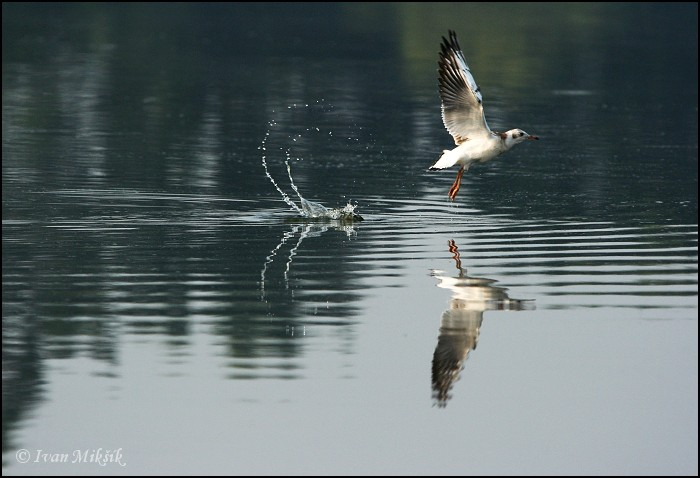 "photo ""Take-off"" tags: nature, wild animals"