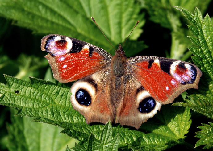"""photo """"Eyes to eyes"""" tags: nature, insect"""