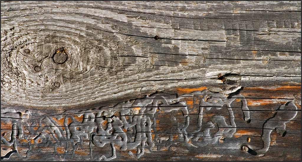 "photo ""Wood Engravings"" tags: abstract,"