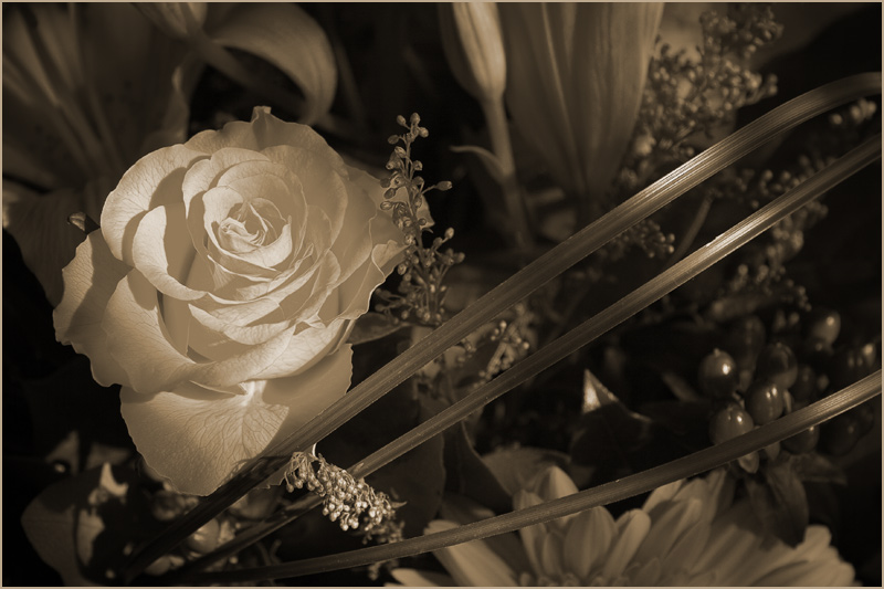 """photo """"* * *"""" tags: nature, glamour, flowers"""