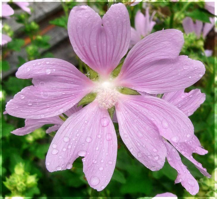 """фото """"***"""" метки: макро и крупный план, природа, цветы"""