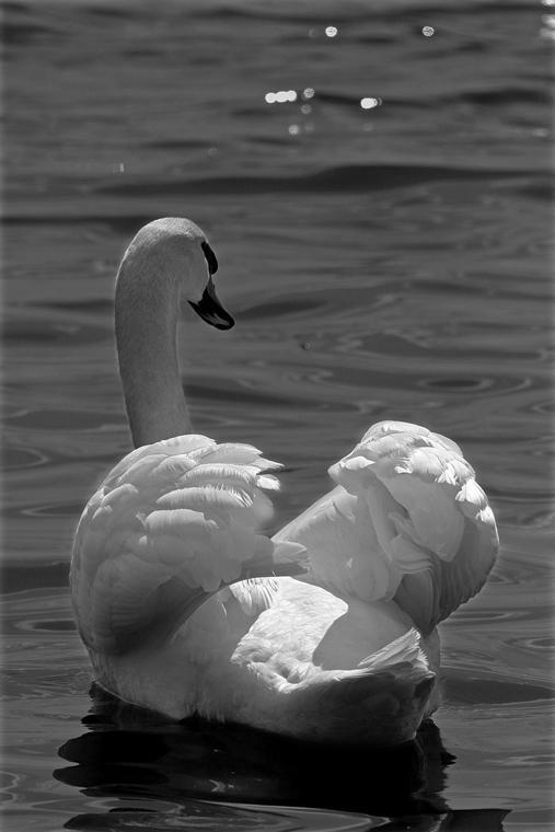 """фото """"The sacred bird"""" метки: природа, черно-белые, дикие животные"""