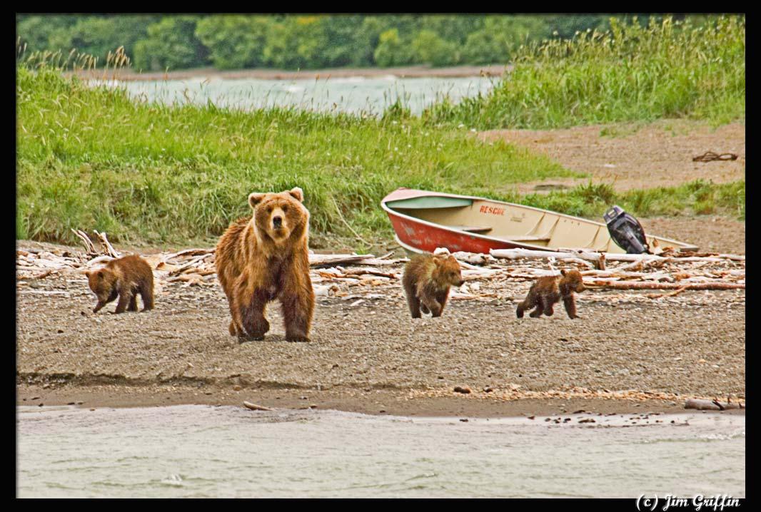"""фото """"Mom's moving on"""" метки: природа, дикие животные"""