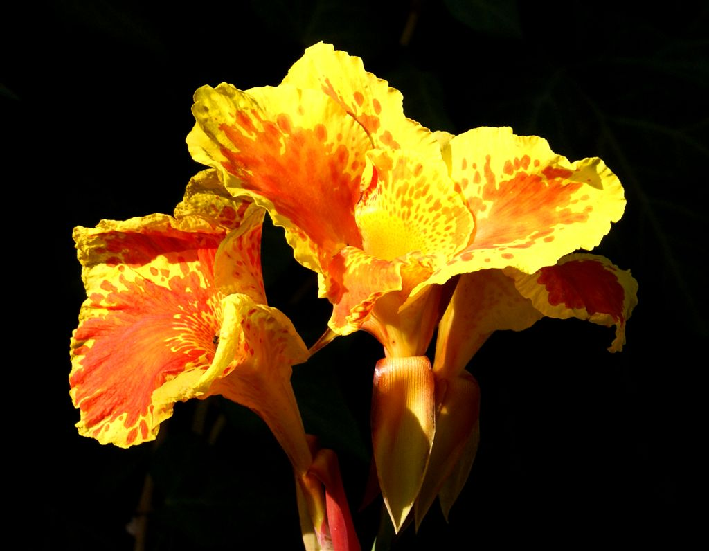 """photo """"Flame"""" tags: nature, flowers"""