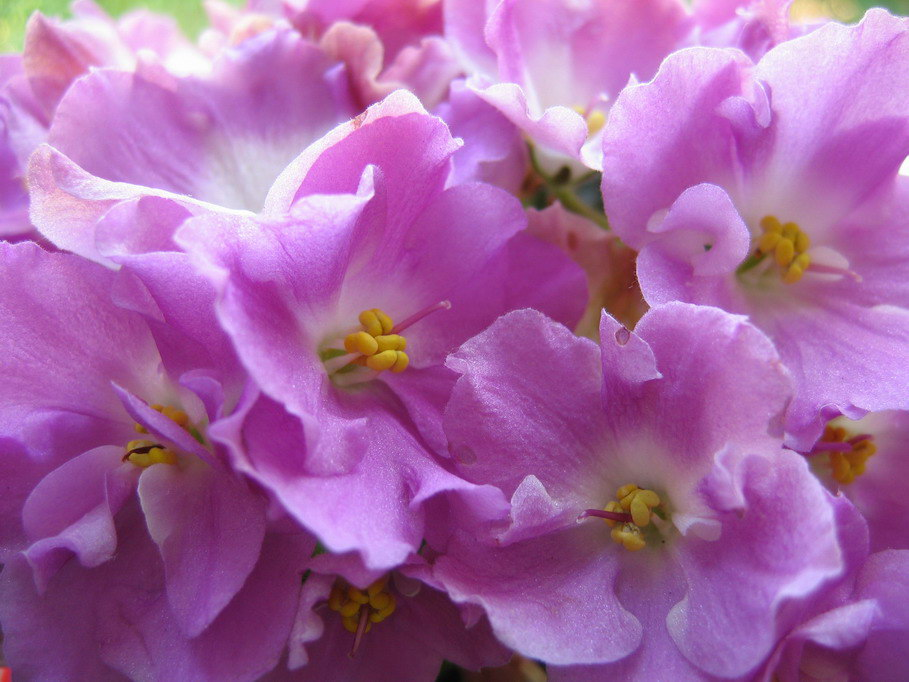 """photo """"***"""" tags: macro and close-up, nature, flowers"""