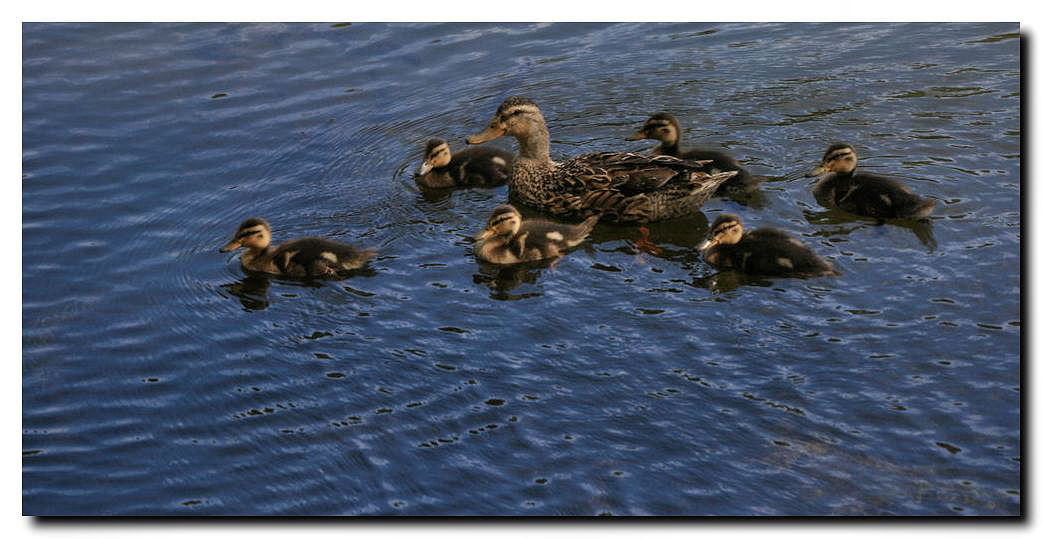 """photo """"Mother and sons - To Luis Lima"""" tags: nature, pets/farm animals"""