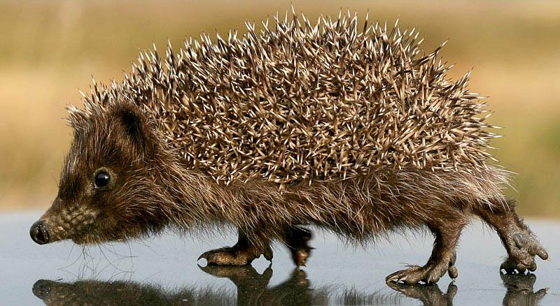 """фото """"Широко шагает молодеШ)"""" метки: природа, дикие животные"""