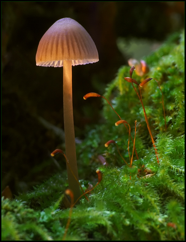"""photo """"^"""" tags: landscape, macro and close-up, forest"""