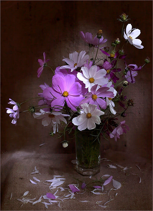 """photo """"***"""" tags: still life, nature, flowers"""