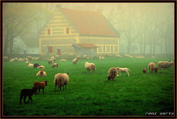 """фото """"misty morning"""" метки: пейзаж, природа, весна, домашние животные"""
