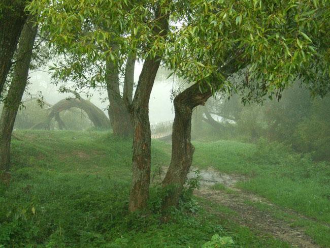 """фото """"Сюжет для картины"""" метки: пейзаж, лес"""