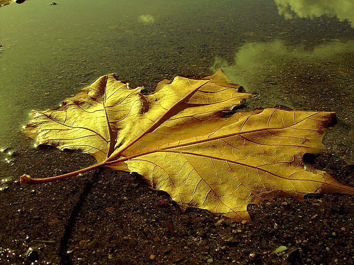 "фото ""I've been for a walk on this autumn day"" метки: пейзаж, осень"