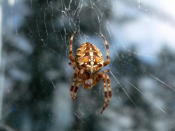 дополнительные услуги фото паука крестоносца вынесли