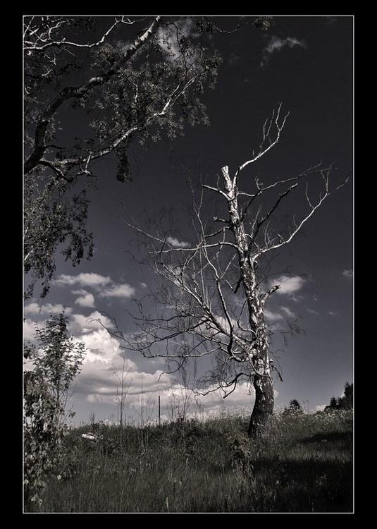 "photo ""Entreaty,,,"" tags: landscape, summer"