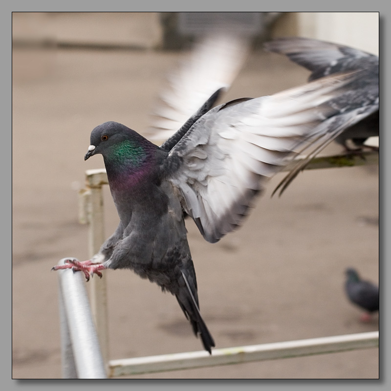 "photo ""I wish you a good landing"" tags: nature, genre, wild animals"