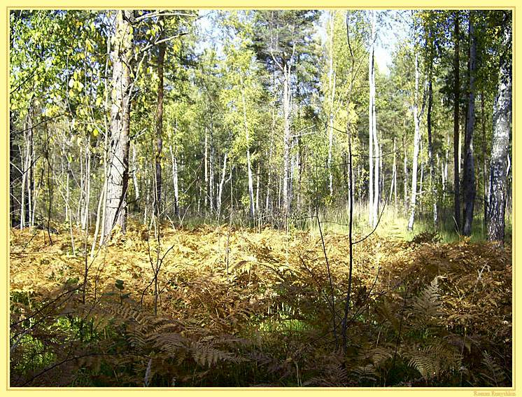 """photo """"***"""" tags: landscape, forest"""