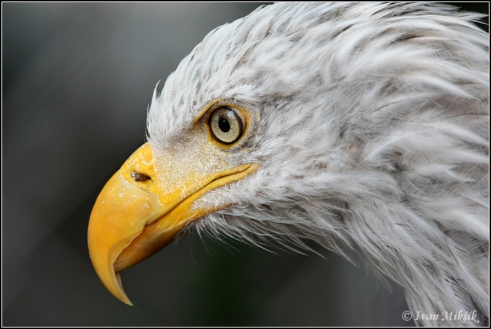 "photo ""Eagle"" tags: nature, pets/farm animals"