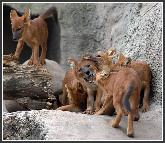 "photo ""***"" tags: nature, genre, wild animals"