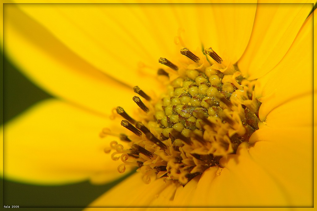 "photo ""FiorFiore"" tags: macro and close-up, nature, flowers"