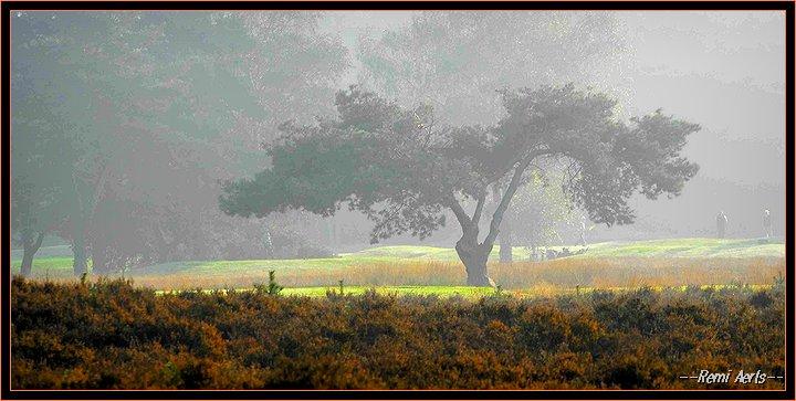 """photo """"sunday morning"""" tags: landscape, nature, sunset"""