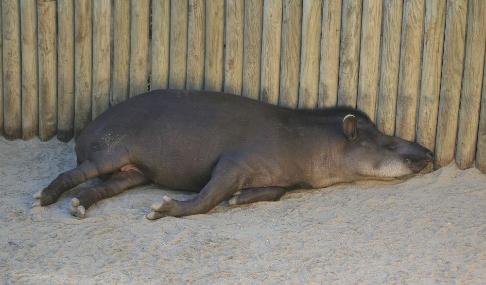 "фото ""Lisbon Zoo - 15/20"" метки: природа, дикие животные"