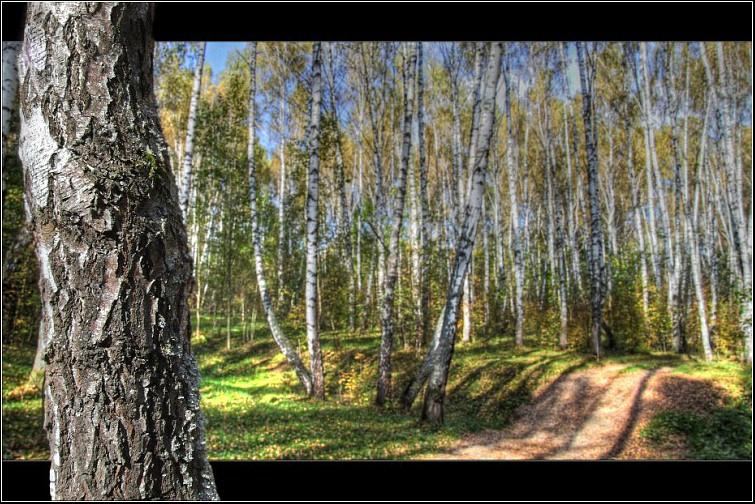 """photo """"Guard."""" tags: landscape, autumn, forest"""