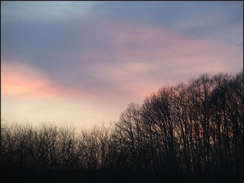 """фото """"wood"""" метки: пейзаж,"""