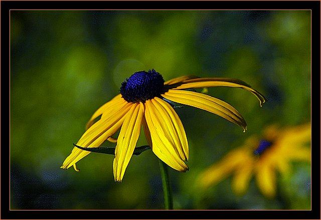 """фото """"yellow and bleu"""" метки: природа, макро и крупный план, цветы"""