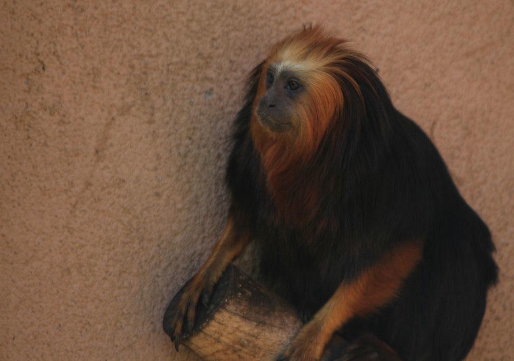 "фото ""Lisbon Zoo - 16/20"" метки: природа, дикие животные"
