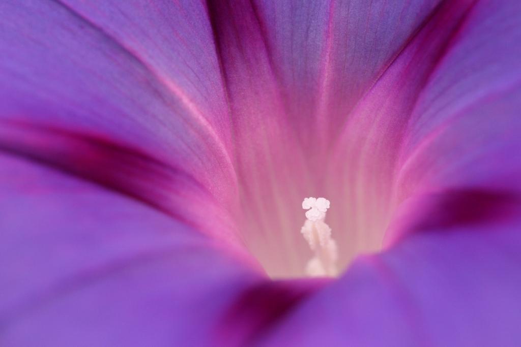 """фото """"Фиолетовое настроение"""" метки: природа, цветы"""