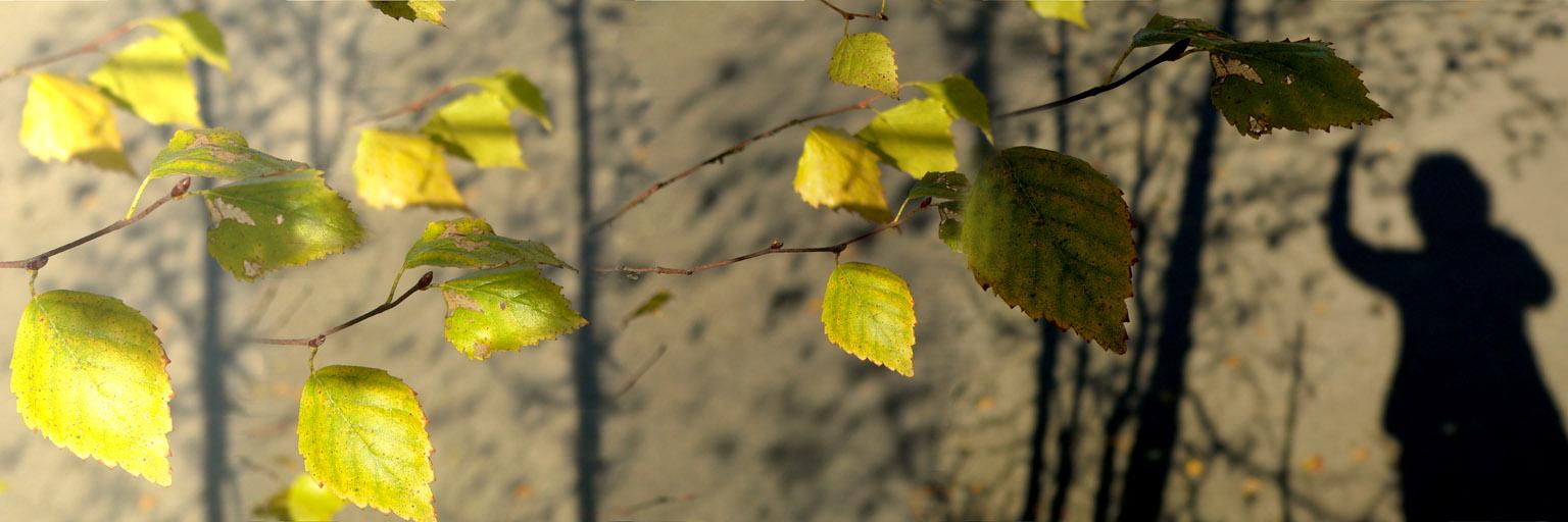 """фото """"Фантазия на тему листопада"""" метки: абстракция,"""