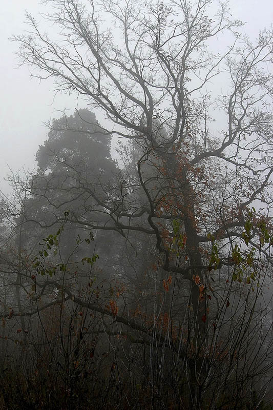 """фото """"Утро седое"""" метки: пейзаж, лес"""