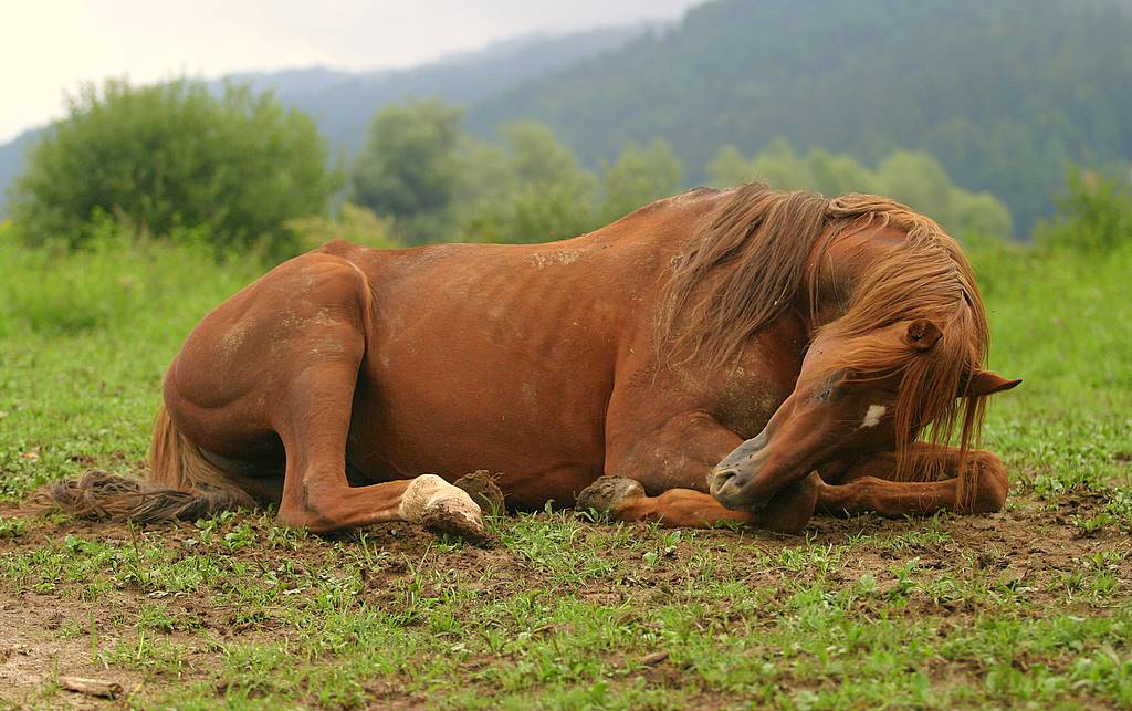 "фото ""waking up"" метки: природа, домашние животные"