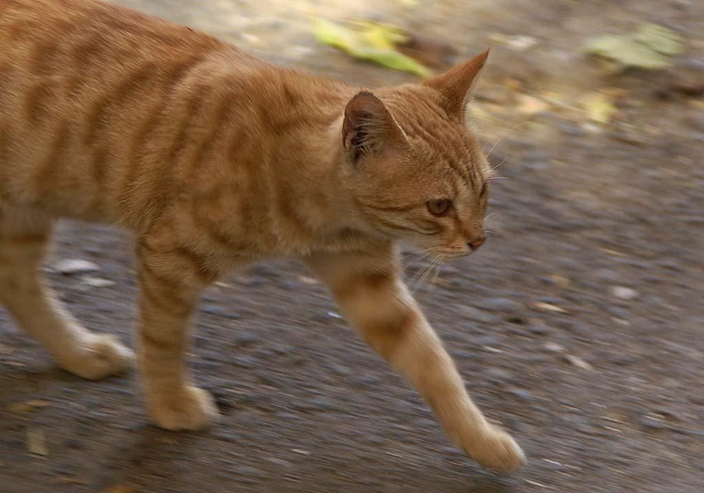 """фото """"Jaguar"""" метки: природа, домашние животные"""