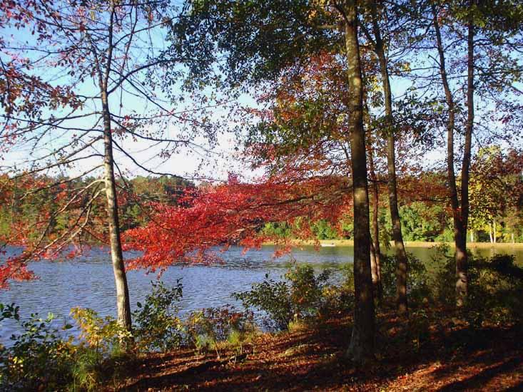 """фото """"Эта яркая осень."""" метки: пейзаж, осень"""