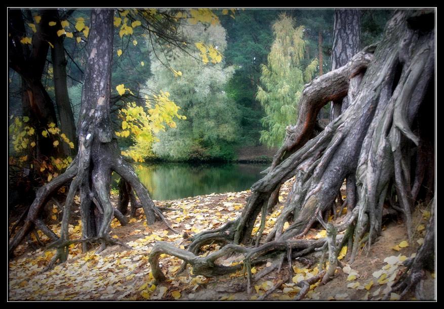 "фото ""Щупальца"" метки: пейзаж, лес, осень"