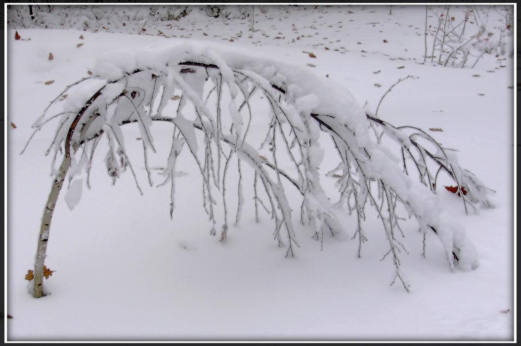 """фото """"Поклон русской зиме"""" метки: ,"""