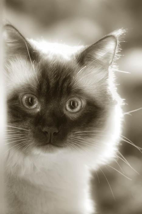 "photo ""Max"" tags: portrait, nature, pets/farm animals"