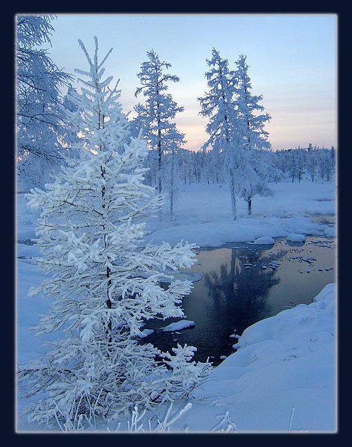 """фото """"Зимний этюд"""" метки: пейзаж, зима, лес"""