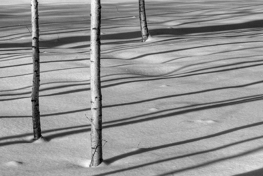 """фото """"февраль"""" метки: черно-белые,"""